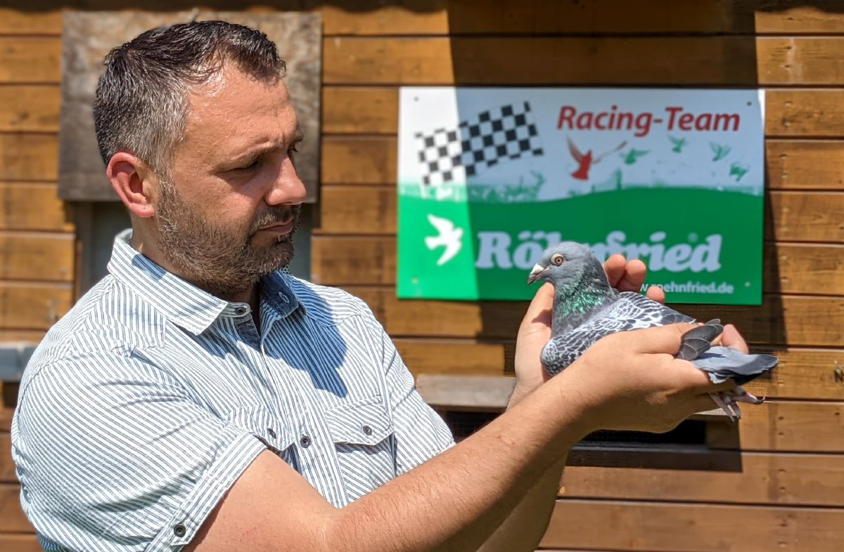Two grandchildren of Indy won 2nd vs 2,357 pigeons